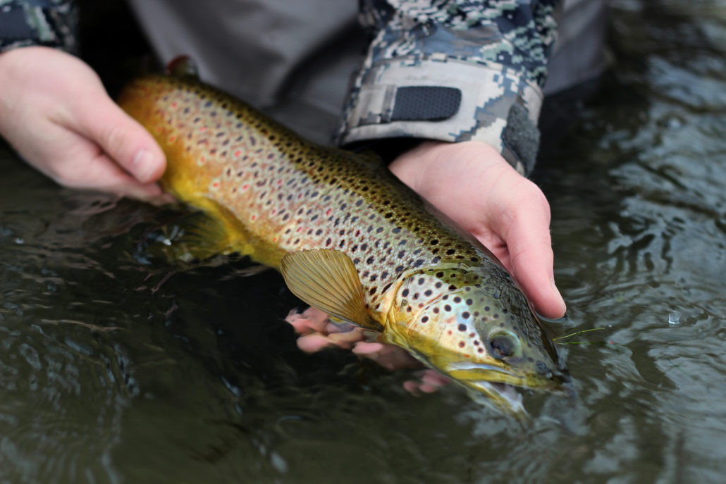 brown trout, montana, wild, streamers, winter, 2013, rain