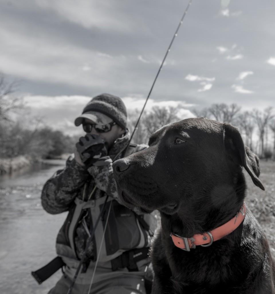 lab, brown, man's, best, friend, montana, fishing, dog