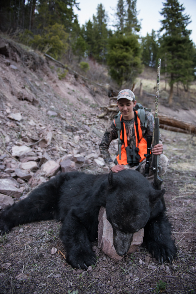 black, bear, hunting, montana, wild, spring, big, monster