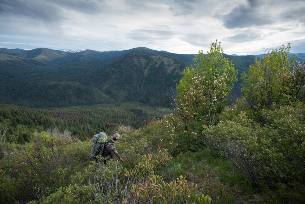 idaho, bear hunt, snowy mountain rifles, black, bears, montana wild, backcountry, spring, rifle, hunting