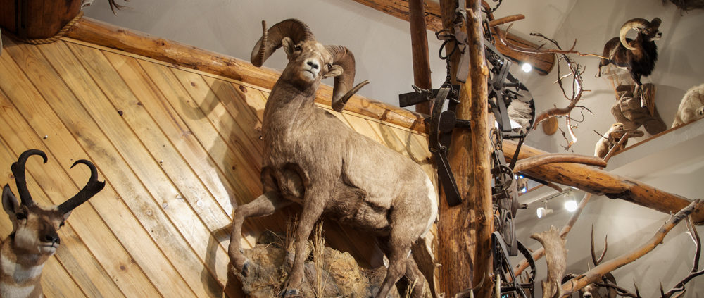 Alpine artistry bighorn sheep