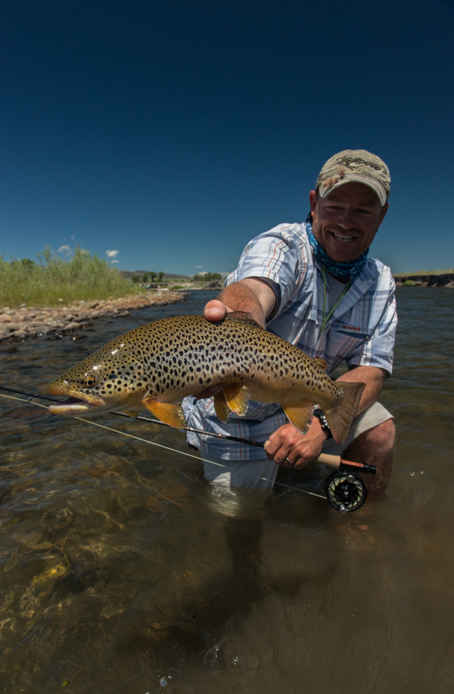 salmon, flies, fly, fishing, madison, river, stonefly inn, montana wild, hatch, montana, rooster, brown trout, scott