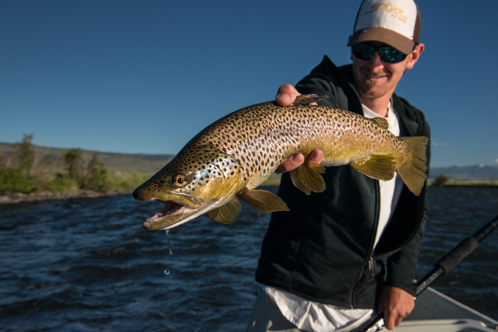 salmon, flies, fly, fishing, madison, river, stonefly inn, montana wild, hatch, montana, rooster, brown trout