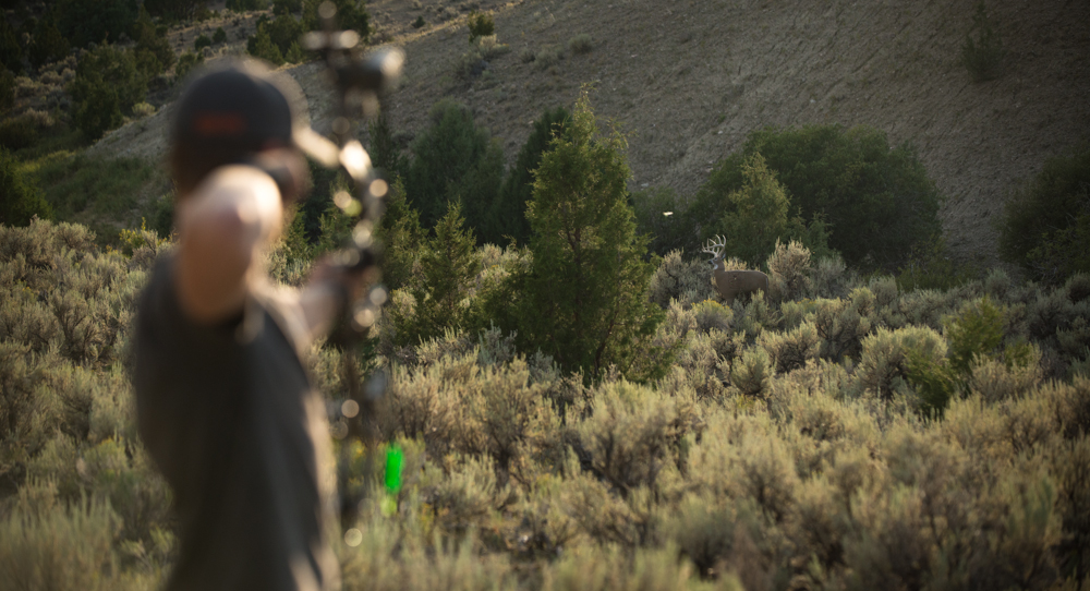 antelope, bowhunting, montana, wild, archery, practice, bear archery, glendel