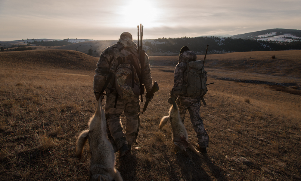 coyote, hunting, montana, wild, snow, double, sitka gear