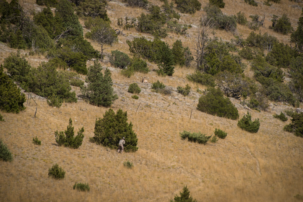 antelope, hunting, montana, wild, bowhunting, bear archery, spot and stalk