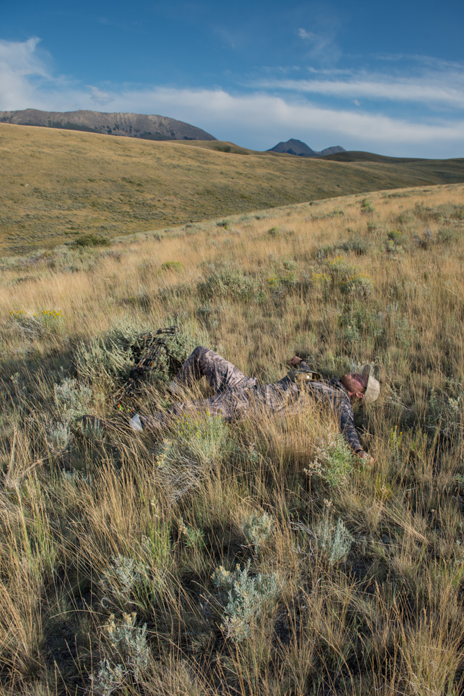 antelope, hunting, montana, wild, video, bowhunting