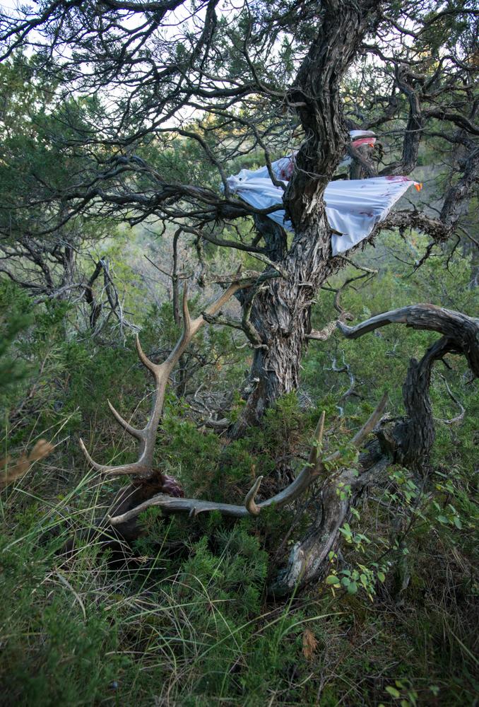 elk, hunting, bowhunting, missouri breaks, bull, montana, wild
