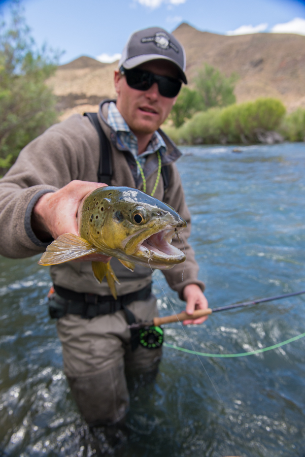 fly fishing, montana, wild, oregon, brown trout, owyhee, grizzly hackle