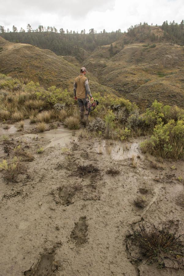 elk, hunting, montana, wild, films, bowhunt, sitka gear