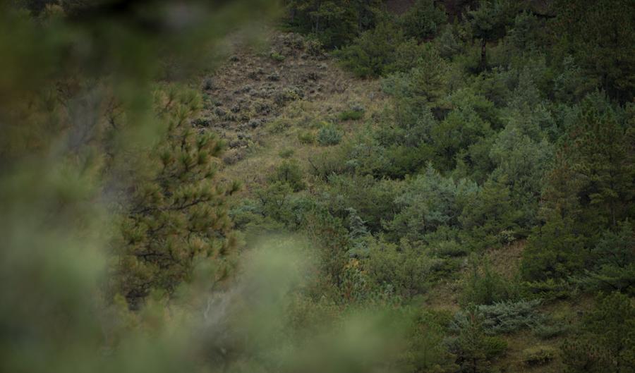 elk, montana, wild, hunting, bow, archery