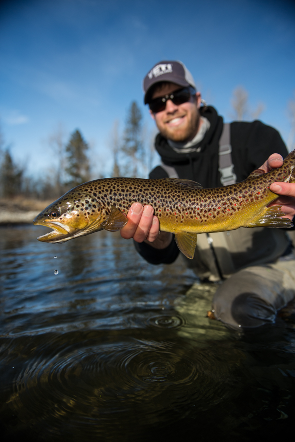 fly fishing, brown trout, montana, wild, yeti, coolers, film, bitteroot