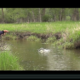 flood, waters, high, water, fly fishing, montana, wild, brown, trout, film, video