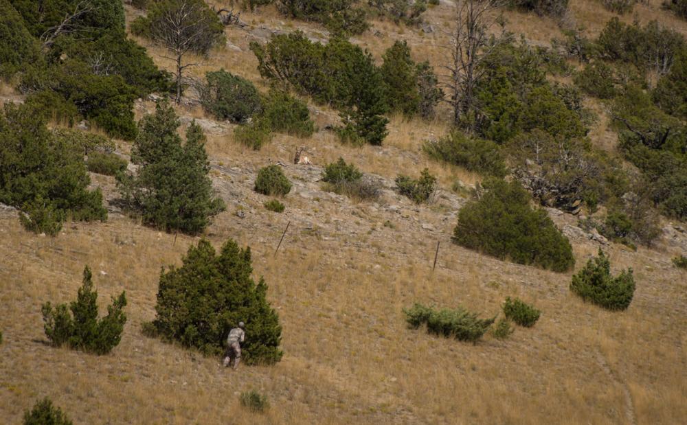 stalking antelope, stalking socks, montana pronghorn, montana wild, sitka gear