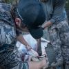 montana, wild, mesh, trucker, hat, fishing, hunting, hunt, elk, deer, new