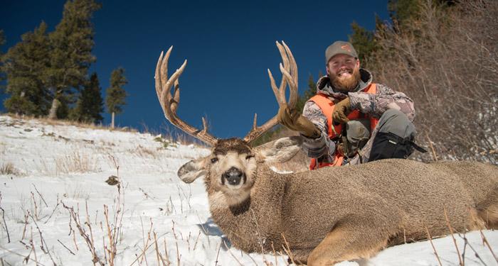 mule, deer, sitka, gear, mountain, buck