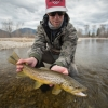 fishing, montana, brown trout, wild