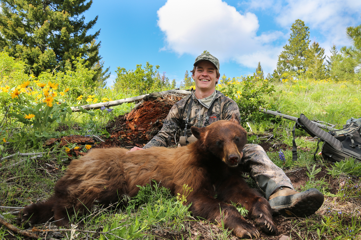 Bear, Hunting, Bear Hunting, Mountains, Montana