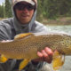 big, brown, trout, montana