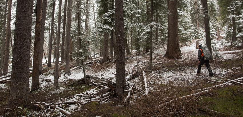 bear hunting, montana, spring
