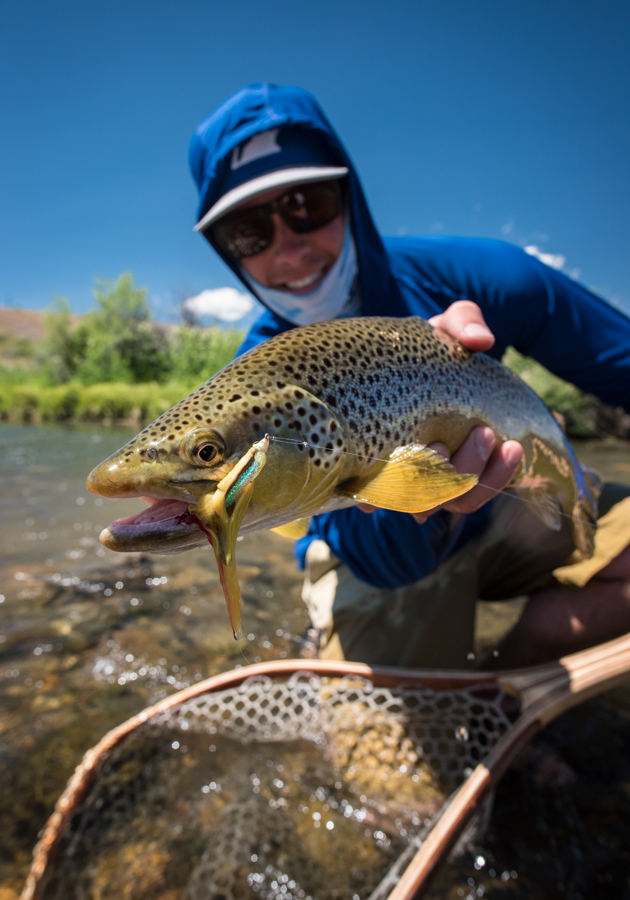 montana, wild, brown trout, streamers, summer