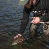 fishing, fly fishing, montana, bozeman, mt