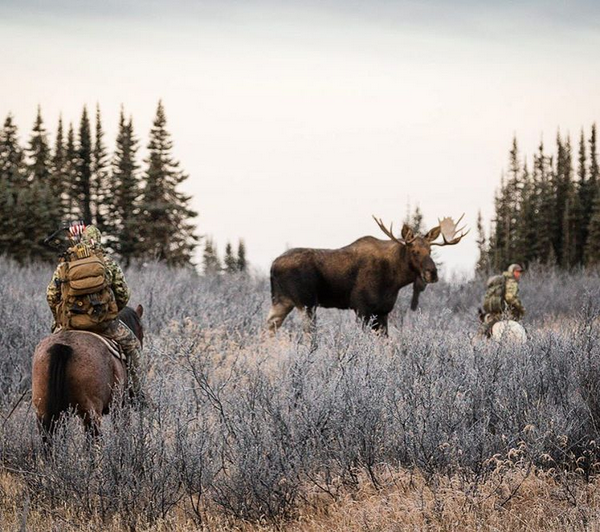 steven drake, photo, photographer, moose, hunting, canada