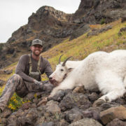 mountain goat, hunting, montana, wild
