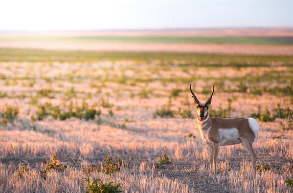 Jerrin uecker, photo, photographer, montana, antelope, Great Outdoor Instagram Accounts