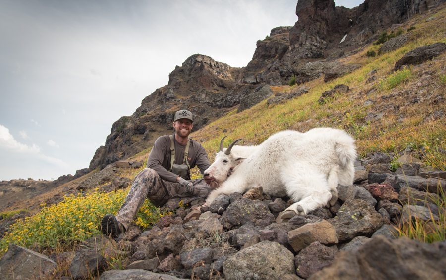mountain goat, hunting, montana, wild, mountain goat hunting