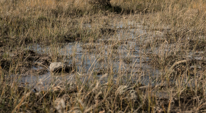montana, gumbo, mud, antelope