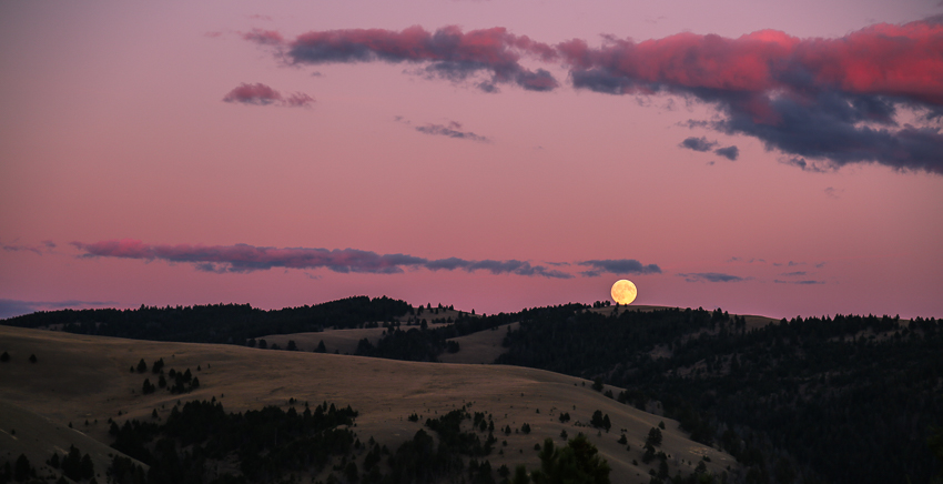 elk, hunting, montana, sunrise, bull, moon