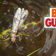 salmonfly, fishing, montana, video