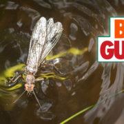 salmonfly, fishing, montana, video