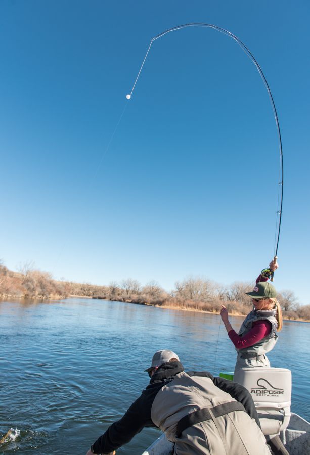 bighorn, river, montana, flyfishing, hooked up, bent fly rod, women, fishing