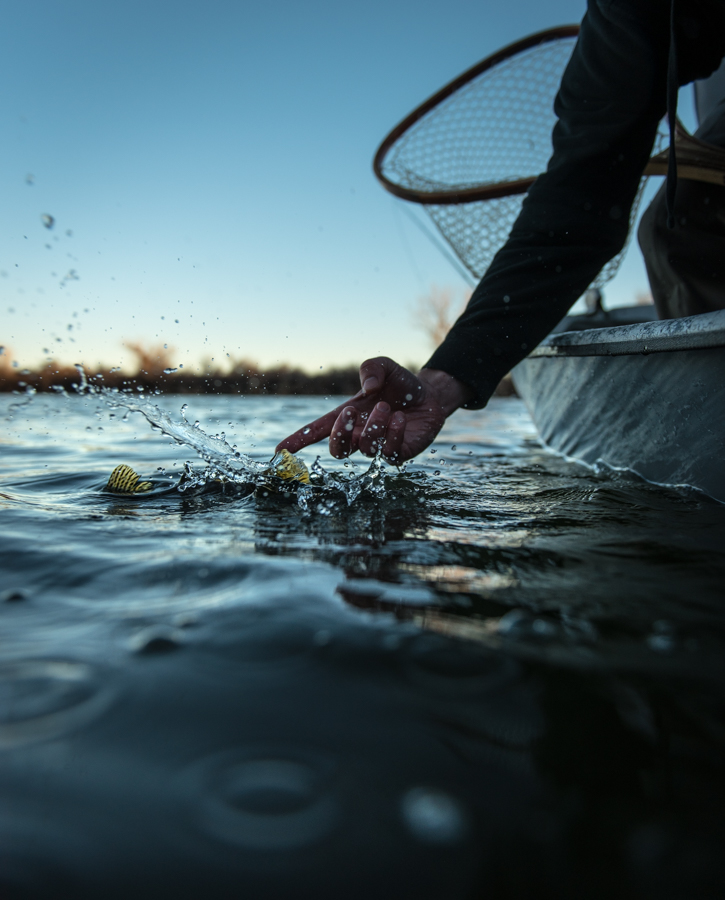 take out trout, montana fishing, sunset, streamer, release