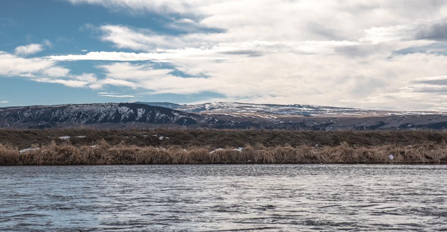 Bighorn, river, montana, fishing, trout