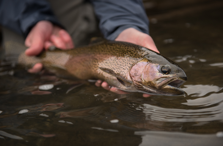 spring, fishing, montana, wild, flyfishing