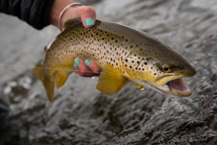 spring, fishing, montana, wild, dry fly, skwala