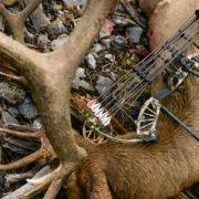 2018, bear archery, bow, promo, lineup, bowhunting elk, elk