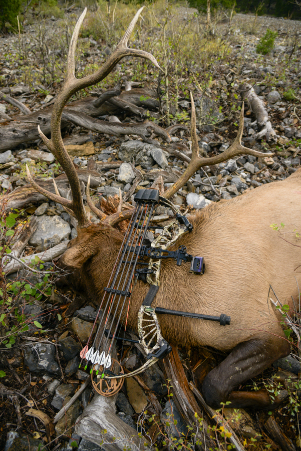 elk hunting, idaho, public land, archery, diy, bear archery, bear approach