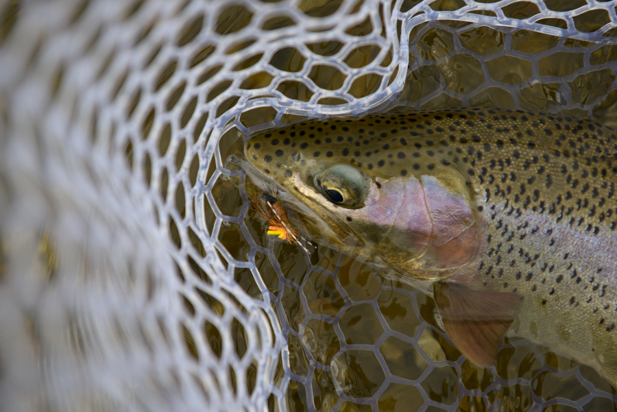 skwala, skwala hatch, montana, fly fishing, video, film