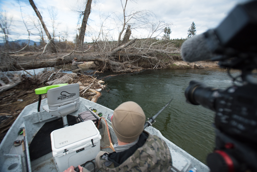 fly fishing, log jam, trout, spring, montana, filming the skwala hatch