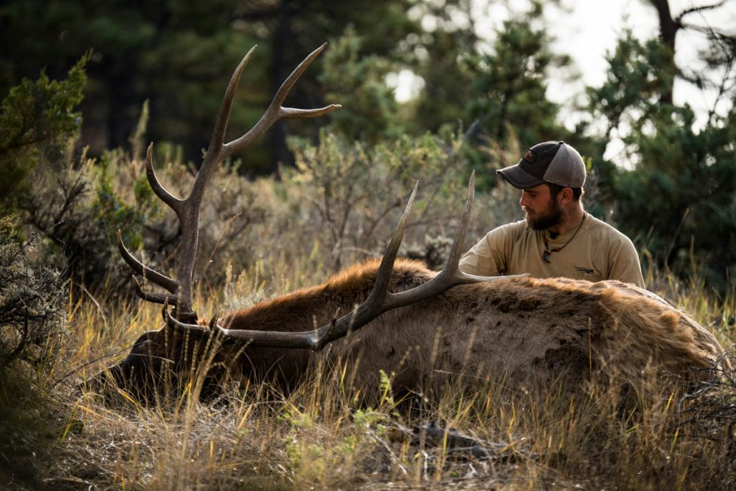 hunting, The Outlier Film, The Outlier, Hunting film, outdoor media, stoke, bull down, archery hunting, bull elk, filmmaking, outdoor film