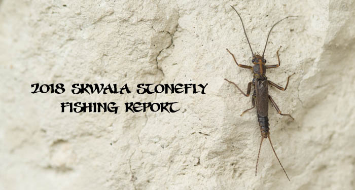 skwala, stonefly, stoke, fly fishing, spring fishing, dry fly hatch, fishing film, Montana Wild, fishing report, outdoor media, fishing films, skwalhalla