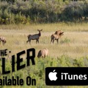 Outlier, elk hunting, bow hunting, archery, bull elk, bugle, iTunes, outdoor media, Montana Wild, Hunting film