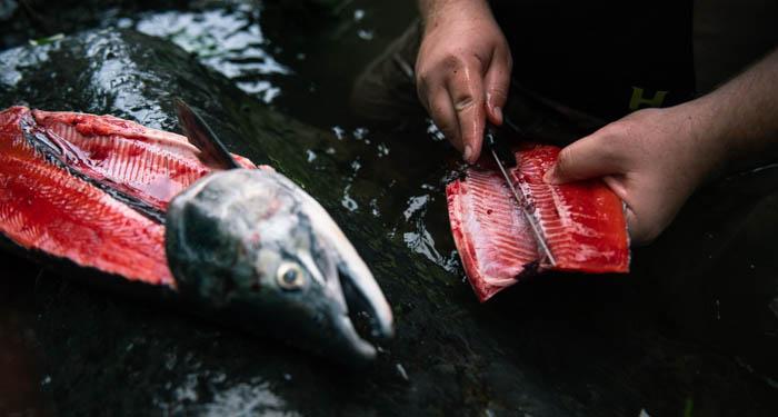 killer whale, fishing alaska, sockey salmon fishing, sockey, salmon, halibut, homer, AK, Alaska, jet boat, arctic grayling