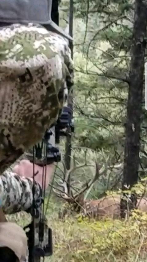 bowhunting, montana, elk, big bull, archery, public land