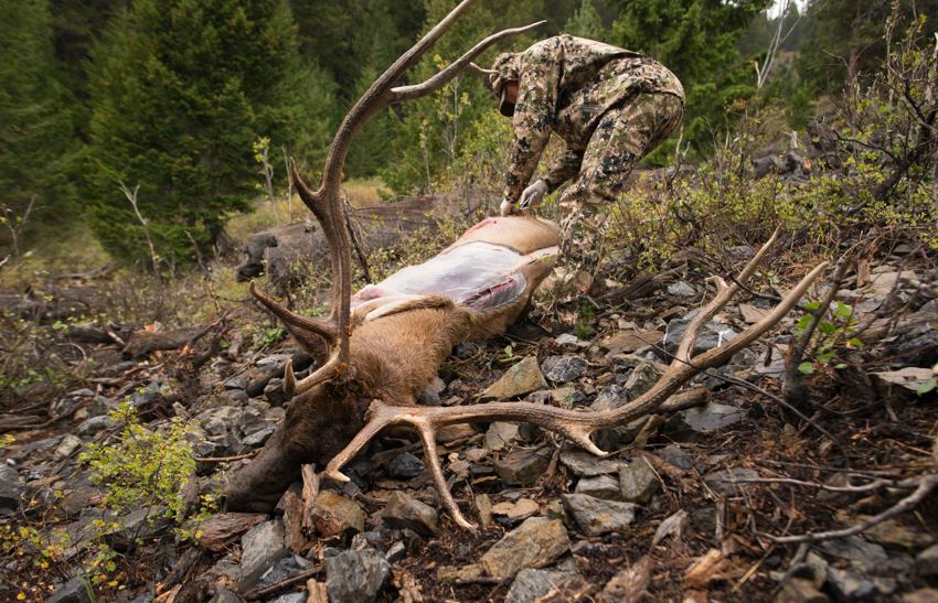 elk hunting, zack boughton, idaho, elk, archery, diy, public lands
