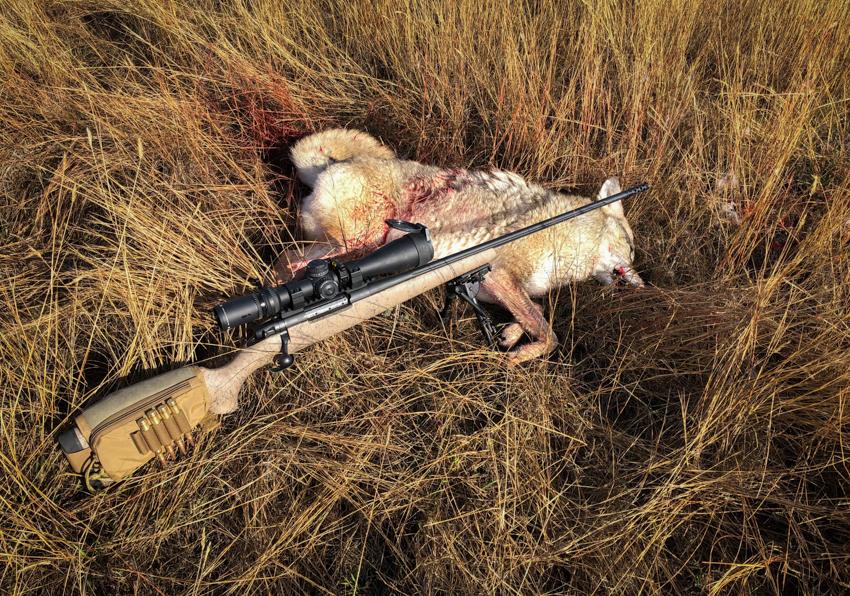 coyote hunting montana, montana, coyote, hunting